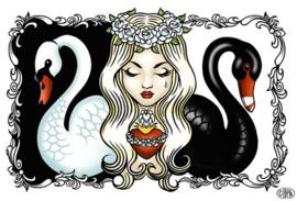 'Swans'