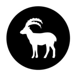 Steenbok 23 December- 20 Januari