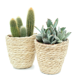 Interior set Basket