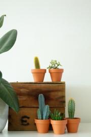 Werkplantpakket Terracotta