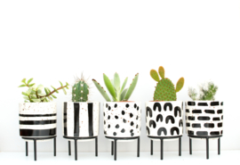 Werkplantpakket Black & White