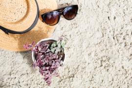 Summertime, cactussen en vetplanten in de zomer