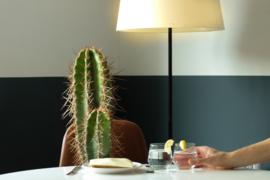 Water, licht en voeding. Hoe verzorg ik mijn cactus en vetplant
