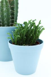 Werkplantpakket Ecoblue