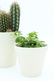 Werkplantpakket Ecowhite