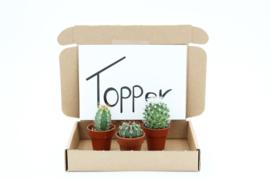 Mailbox cactus present