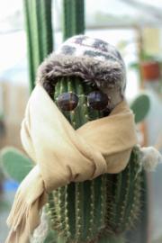 Cactussen en vetplanten in de winter
