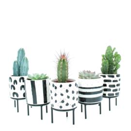 Interieur set (5,5 cm) Black & White