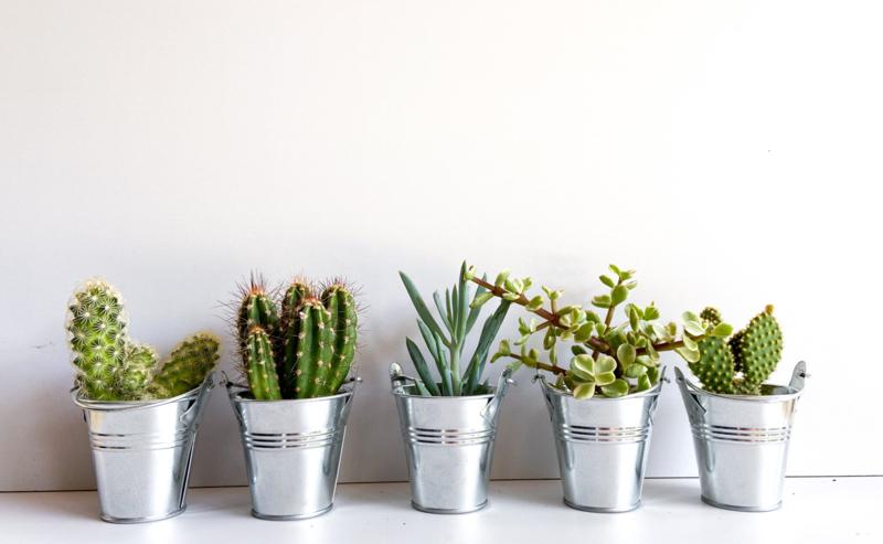 Werkplantpakket Classy bucket