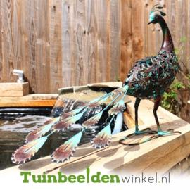 Dieren tuinbeeld ''De bijzondere pauw'' Tbw0871pr54