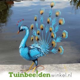 Dieren tuinbeeld ''De blauwe pauw'' Tbw0871pr50