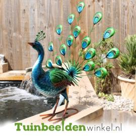 Dieren tuinbeeld ''De eigenzinnige pauw'' Tbw0871pr53