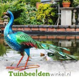 Dieren tuinbeeld ''De fascinerende pauw'' Tbw0871pr52
