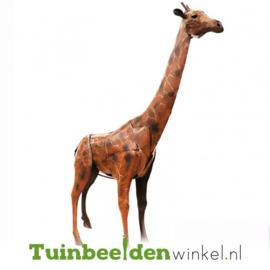 Dieren tuinbeeld ''De imposante giraffe'' Tbw0871pr10