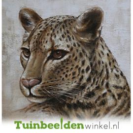 Olieverf schilderij dieren ''De katachtige'' TBW006236