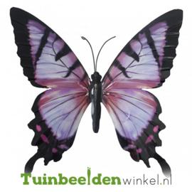 Metalen vlinder ''Paarse metalen vlinder'' TBW0871pr70