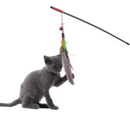 Kattenhengel met veertjes en belletje