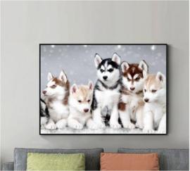 Diamond Painting Husky 40x60 cm (zonder lijst)