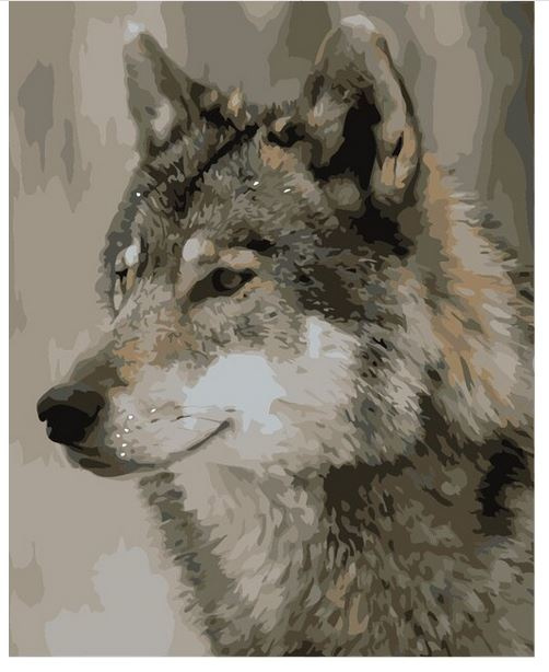 Schilderen op nummer canvas Wolf 50x65 cm (zonder frame)