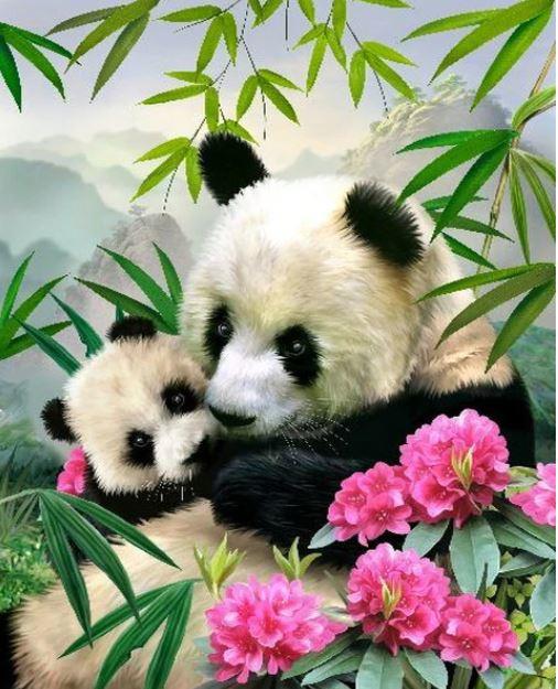 Schilderen op nummer canvas panda 40x50 cm (zonder frame)