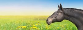 Vakantie - 6 dingen die je moet regelen voor je paard.