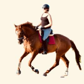 Paardrijden in de hitte