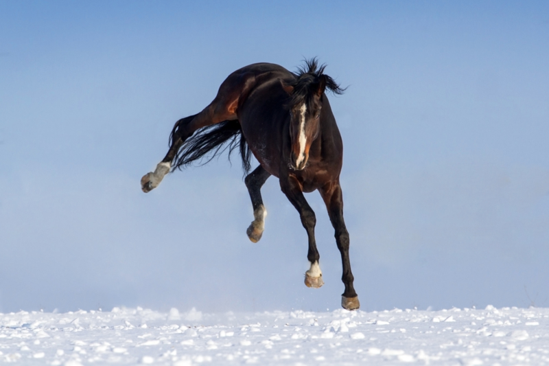Paard geschoren: Dekenstress!