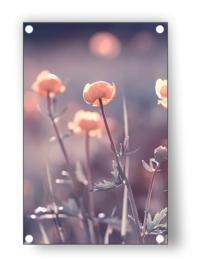Tuin Poster | zonnestraal in bloem |  50x70 cm