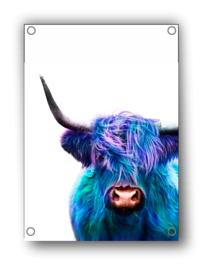 Tuin Poster | gekleurde hoogland koe|  50x70 cm