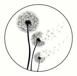 Muurcirkel | blaasbloem / Paardebloem