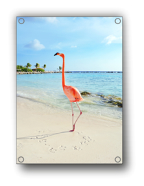 Tuin Poster |flamingo full-color|  50x70 cm