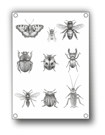 Tuin Poster | insecten |  50x70 cm