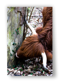 Tuin Poster | hooglander|  50x70 cm