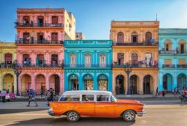 Havanna XXL4-042 Komar