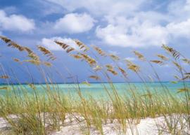 Ocean Breeze 8-515 Komar