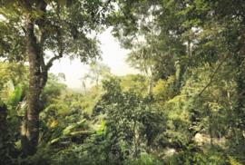 Dschungel XXL4-024 Komar