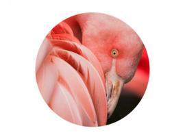 BN Mooi roze flamingo 300328