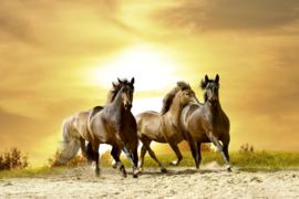 @Walls fotobehang paarden in de zonsondergang 0227