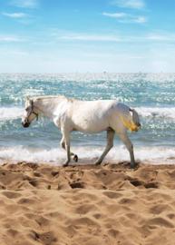 Behang Expresse Kate & Andy INK7424 paard op het strand