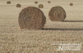 Hayday  3750006 Farm Life