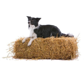 Barn Dog 3750045A - 3750054B Farm Life hond