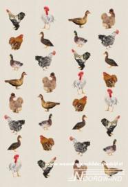 Birds 3750026 Farm Life