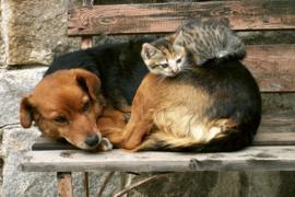 @Walls fotobehang hond en kat 0221