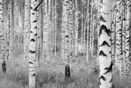 Woods XXL4-023 Komar