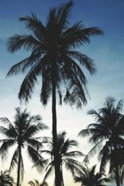 PhotowallXL palmtrees 158849 palmbomen