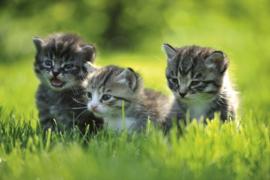 @Walls fotobehang kittens 0222