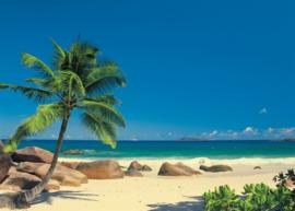 Seychellen 4-006 Komar
