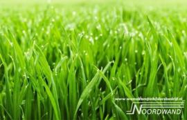 Grass 3750010 Farm Life