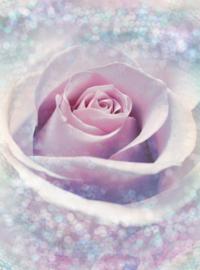 Delicate Rose XXL2-020 Komar