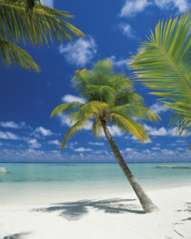 Ari Atoll 4-883 Komar